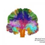 Posos de la lectura en el cerebro