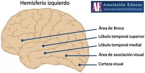 hemisferio-izquierdo